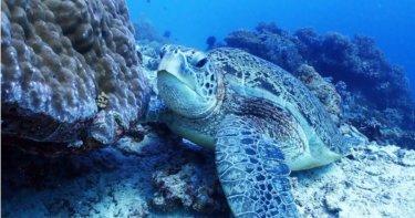 ダイビング好き必見!バリカサグ島でギンガメアジやウミガメを見よう♪